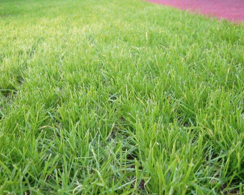 safety-slab-lawn-grating-45mm_photo2